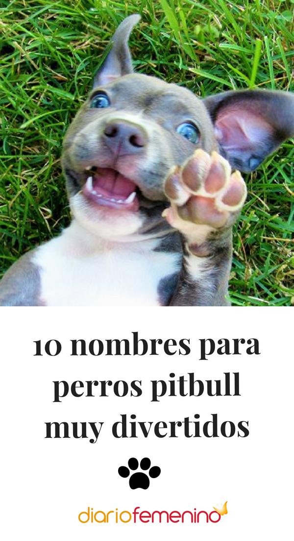 10 Nombres Para Perros Pitbull Muy Divertidos Perros Pinterest