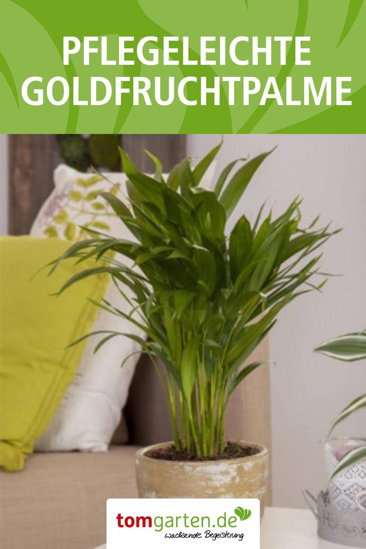 14+ Gruene pflanze mit langen blaettern 2021 ideen