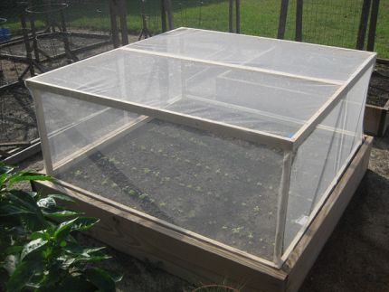Raised Bed Pest Cover Raised Garden Vegetable Garden Raised Beds Raised Garden Beds