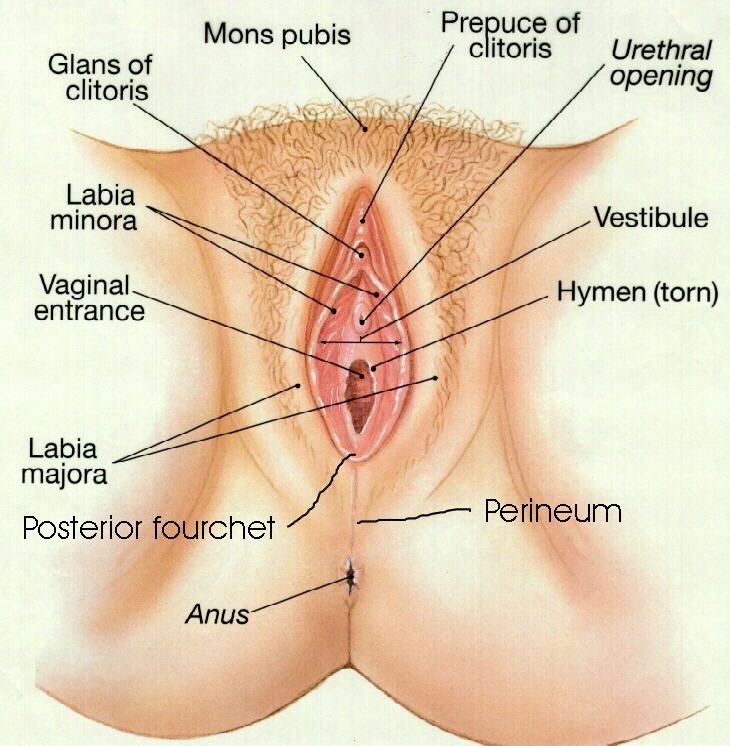 The Vagina and Vulva | Chapter 28 | Pinterest