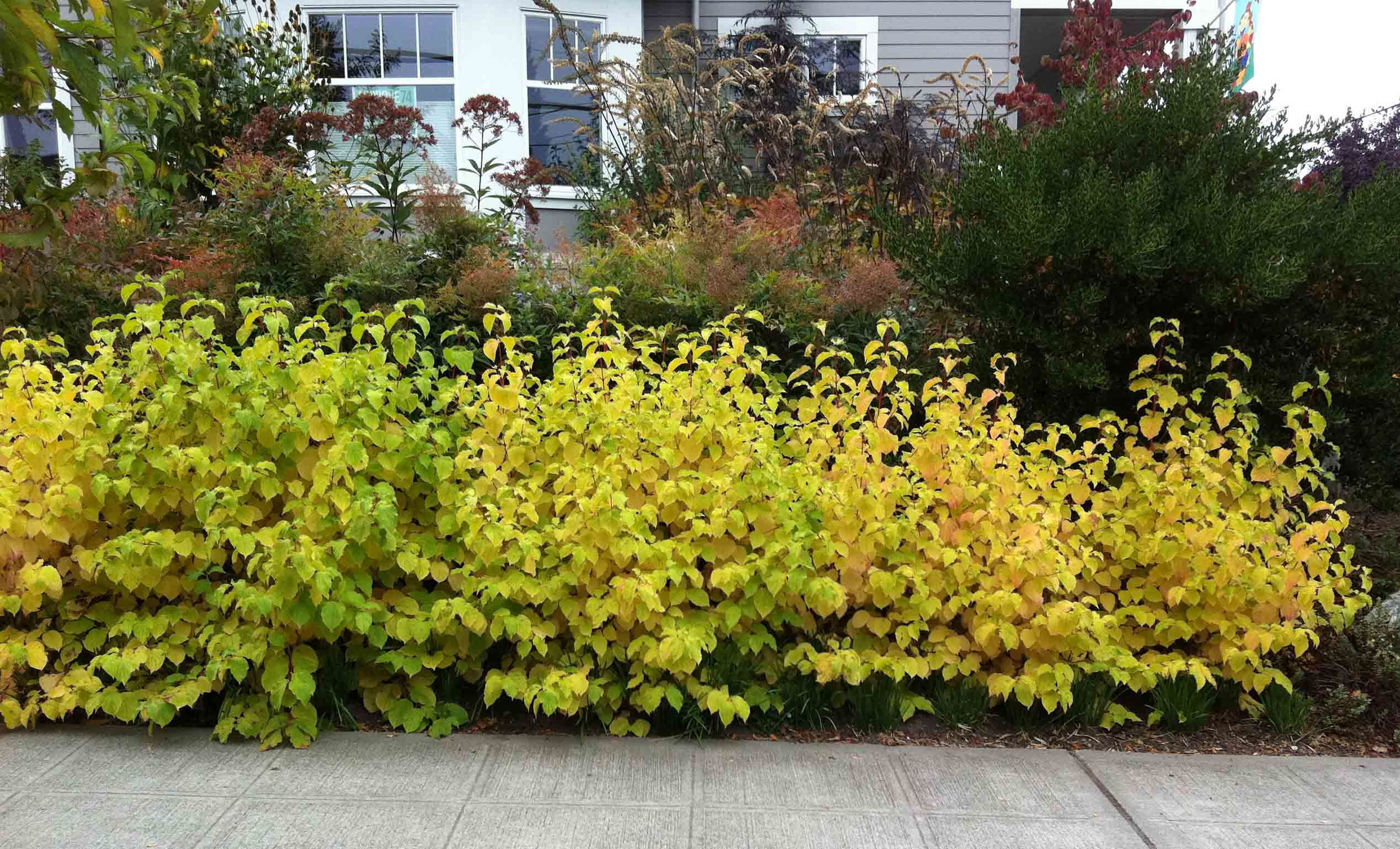 Plant Update October Red Twig Dogwood Etc Plants Red Twig Dogwood Dog Friendly Plants