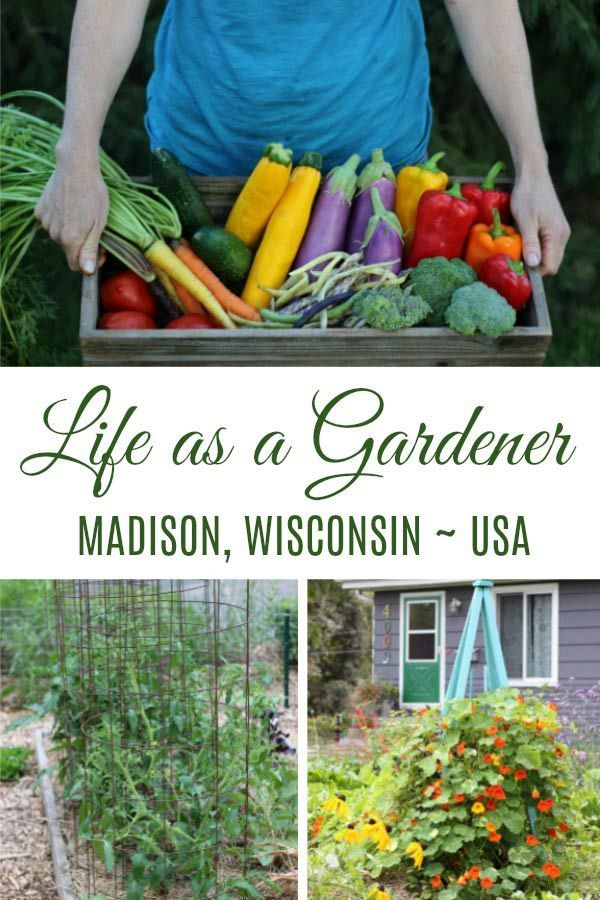 About Home Vegetable Garden Gardening For Beginners Vegetable