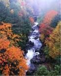 "AOL Image Search result for ""http://www.mainethingstodo.com/mttd/wp-content/uploads/2009/04/fall-foliage.jpg"""