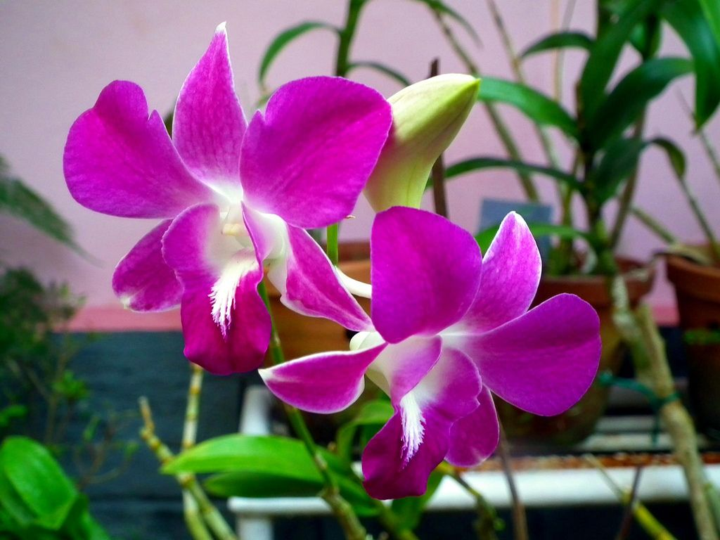 Small Purple Orchid Flower Aa Flowers Pinterest Orchids