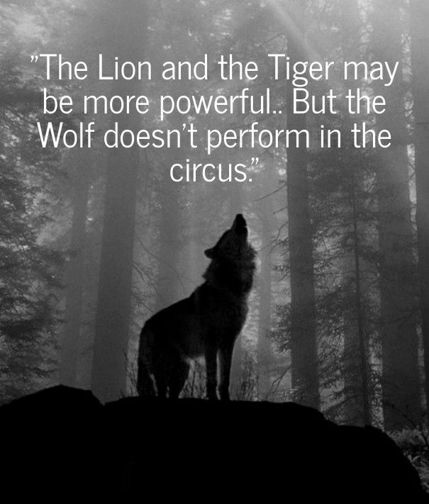 Tattoo Quotes Wolf: #quotes #wildlife #wolves #lions #tigers #circuses