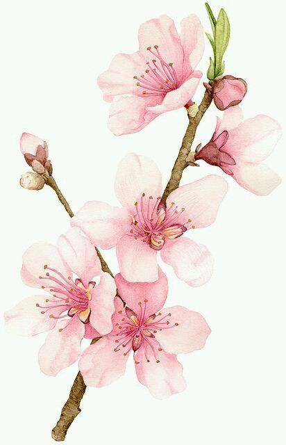 30 Stunning Cherry Blossom Photography Watercolor Flowers