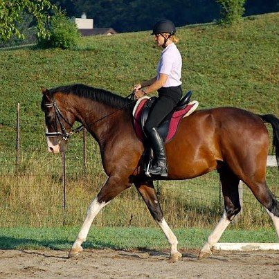 Lynda Weese And Ziggy From Lynda I Have A Horse That Was Mutton Withered Within 6 Months Of Using The Saddle His Withers Came Up And His Canter Training W,White Sweet Potato Pie