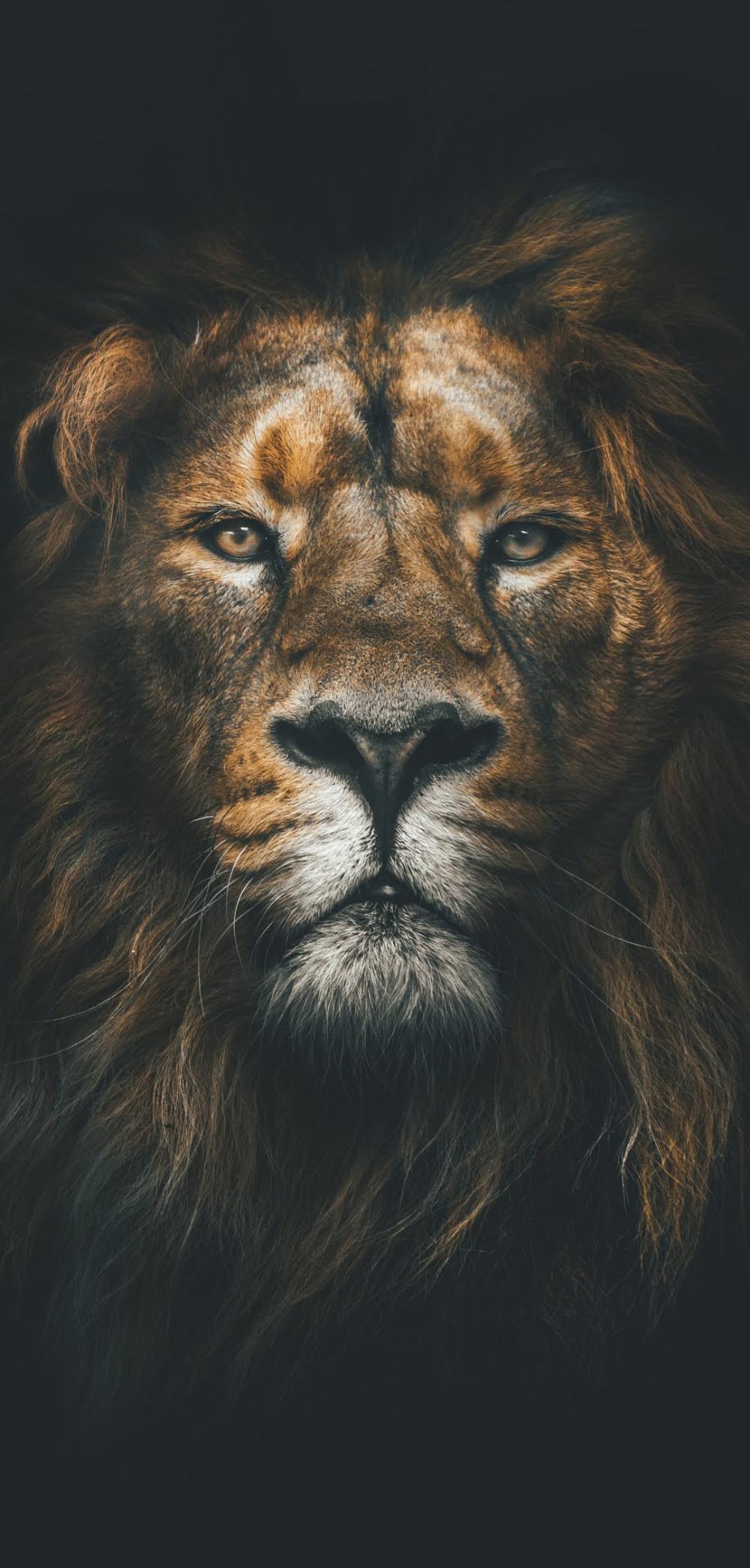 Lion Wallpaper Hd Pets Collection Laginate Leao Papel De Parede Fotografia De Leao Tribo De Juda