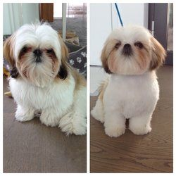 The Dog Barber 46 Photos 87 Reviews Pet Groomers Hayes