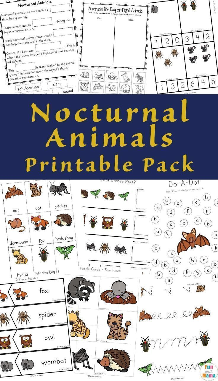 15++ Nocturnal animals for kids ideas