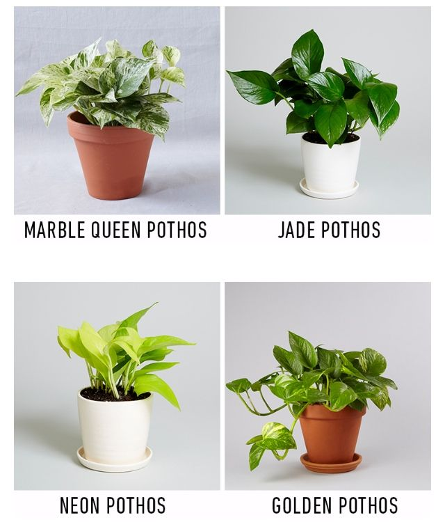Try These Houseplants