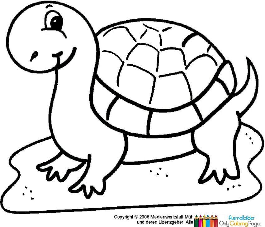 ausmalbilder schildkröte  ausmalbilder schildkröte