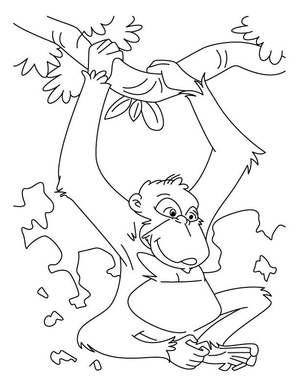 Free Printable Chimpanzee Coloring Pages For Kids Coloring Pages