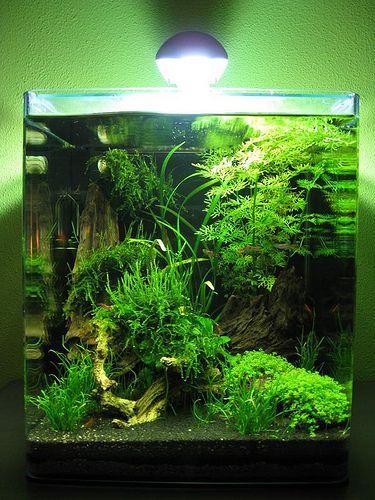 aquascape aquascaping pinterest aquariums fish and. Black Bedroom Furniture Sets. Home Design Ideas