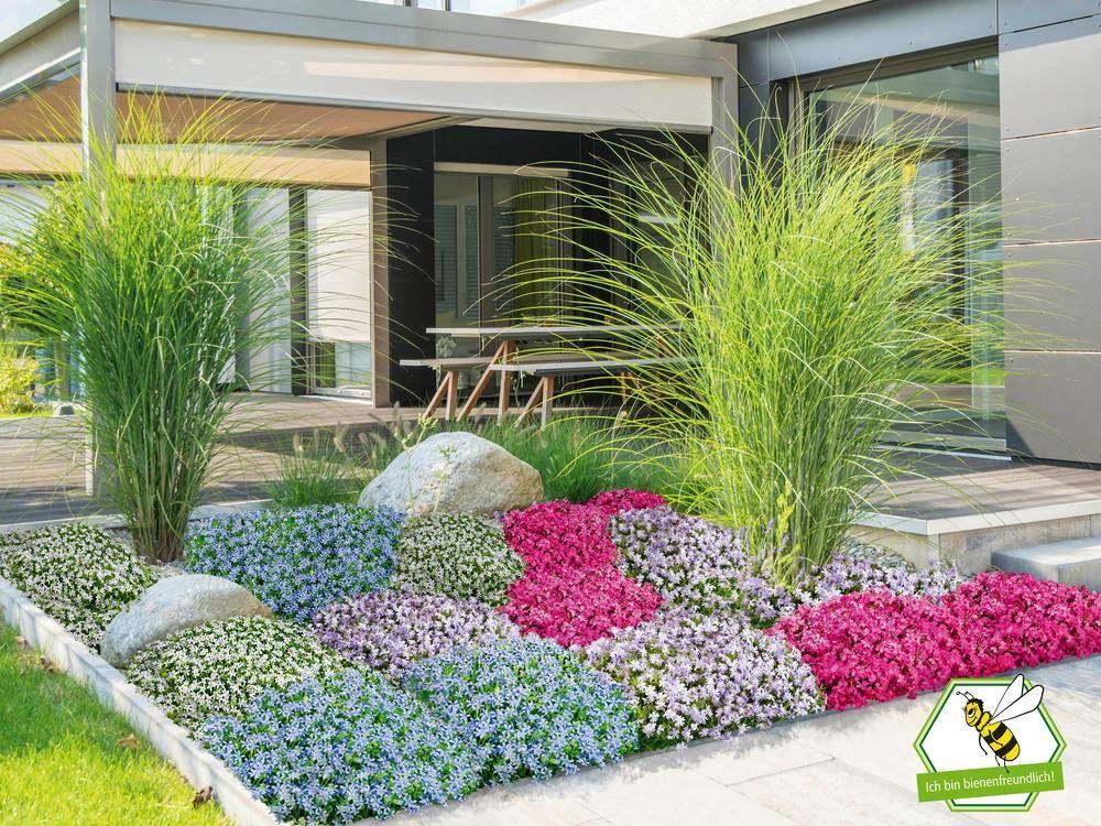 Mein Schoner Garten Bodendecker Set Eyecatcher 19 Pflanzen Gunstig Online Kaufen Mein Schoner Garten Shop In 2020 Bodendecker Pflanzen Gartengestaltung