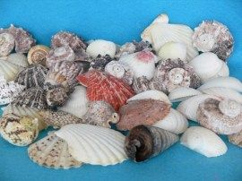 Shells Acuario Malaga Acuario Tropical Tropical Acuario