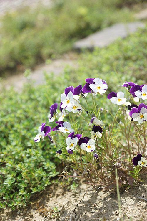 お花たち(2015年5月)