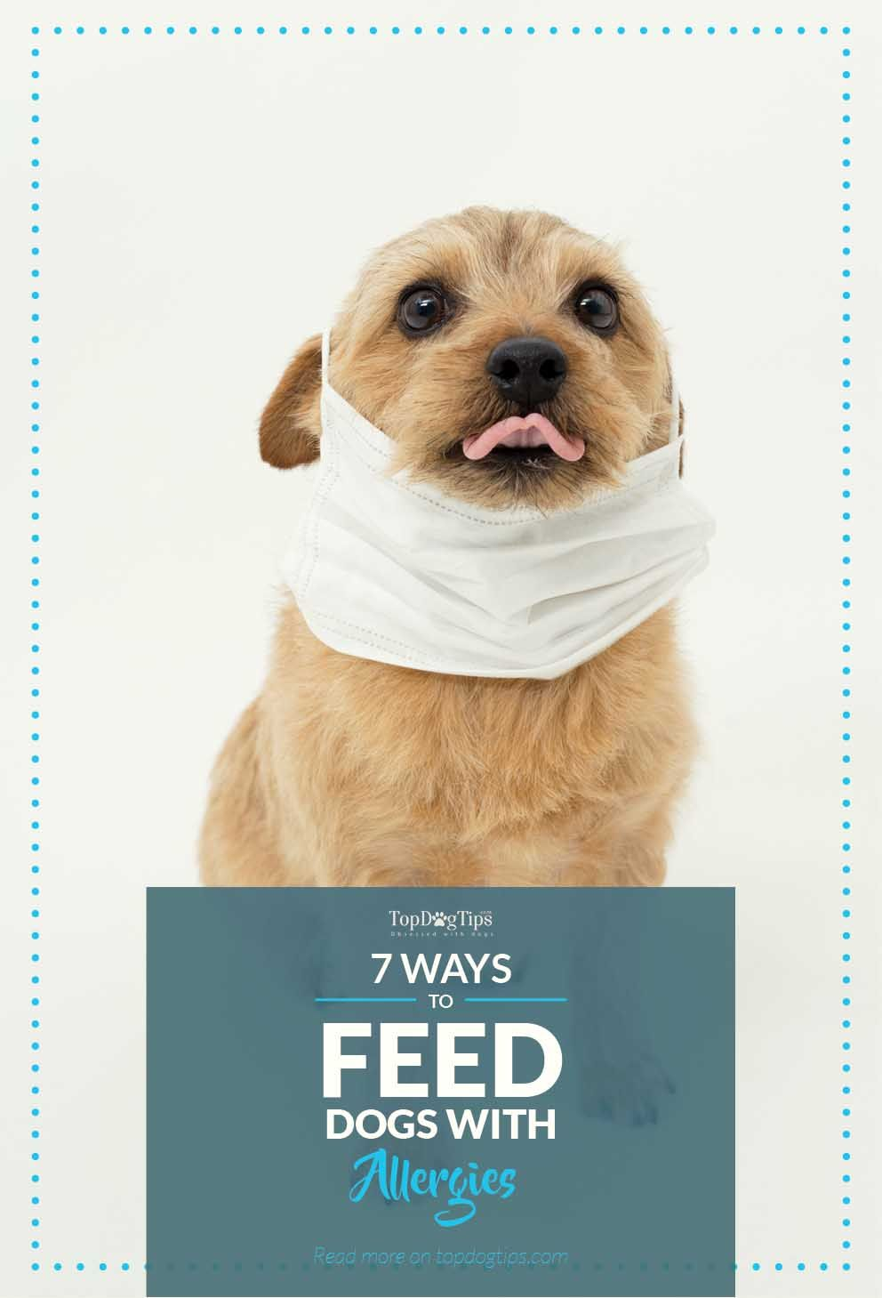7 tips on how to feed dogs to deal with and prevent