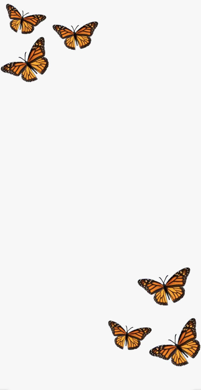 Epingle Sur Papillons