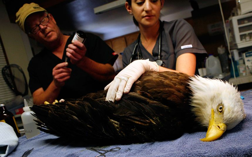 Animal pictures of the week 10 July 2015 Eagle face