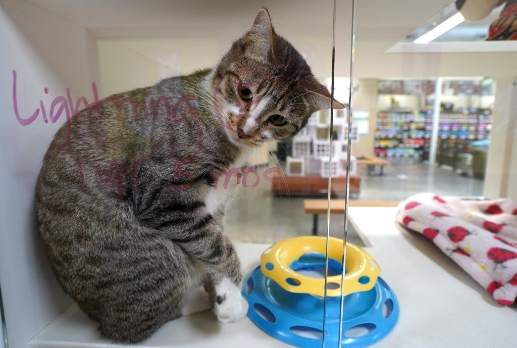 How Cities Took The Lead In A New Statewide Law Requiring Pet