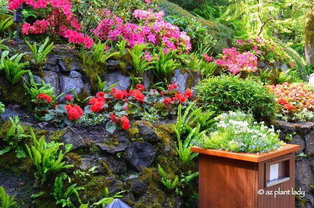 RAMBLINGS FROM A DESERT GARDEN....: Road Trip Day 7: The Beauty of Butchart Gardens #butchartgardens
