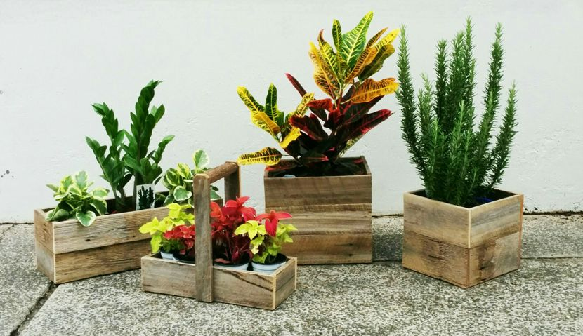 Timber Pots with Plants