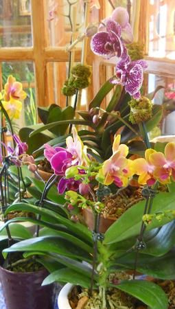 I love beautiful floral arrangements. You may wish to check out Tryforos & Pernice.