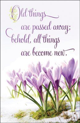 All Things Become New, Bulletins, 100-Pack