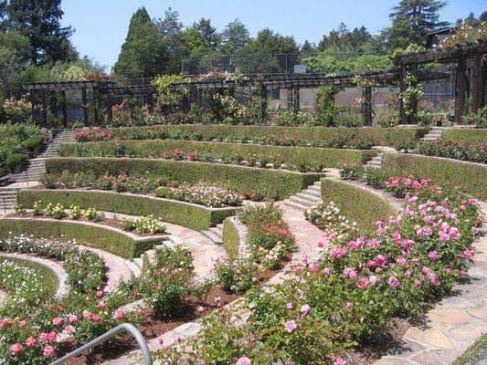 Berkeley Rose Garden Places In San Francisco Dream Garden Rose Garden Design
