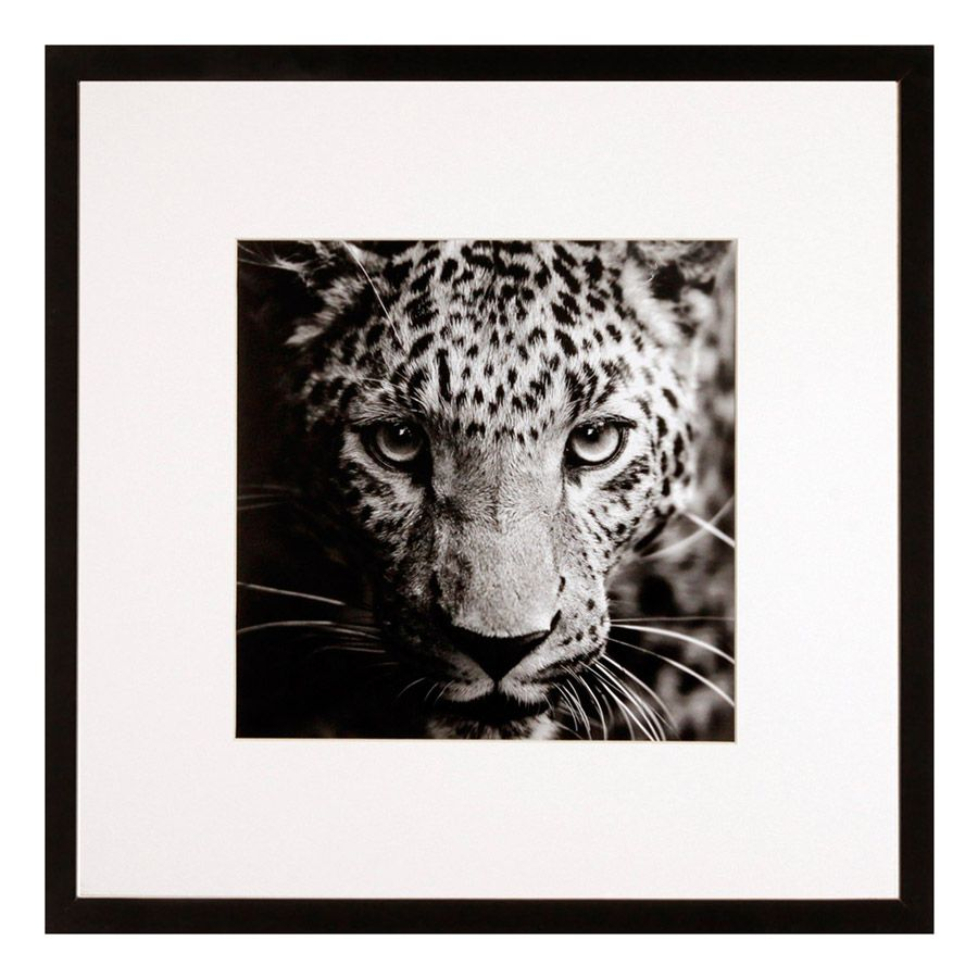 photo d 39 art animal sauvage noir et blanc avec cadre bois et verre 40x40cm wild g c interiors. Black Bedroom Furniture Sets. Home Design Ideas