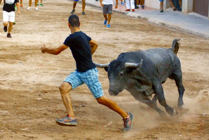 torodigital: Poca trasmisión con el respetable, mostró el toro...