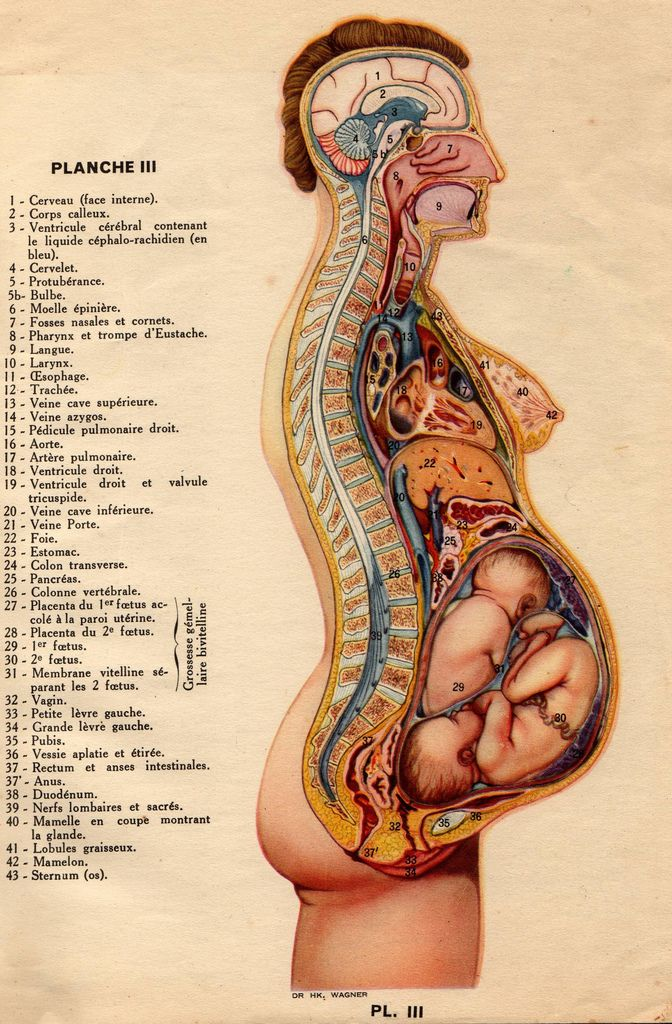 anatomie (1937) | Little Peoples | Pinterest | Twins, Anatomy and ...