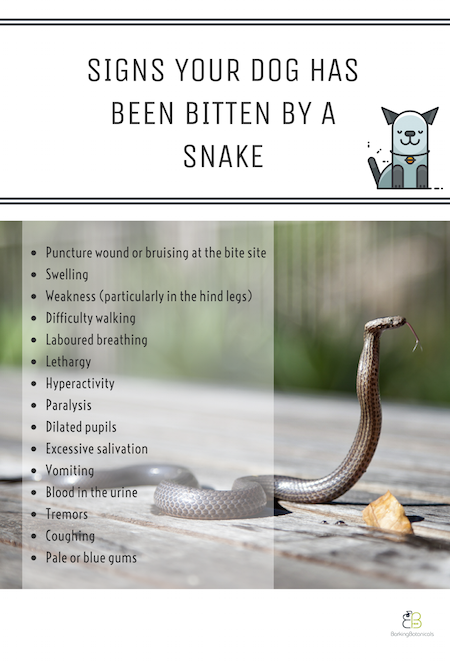 WHAT TO DO IF YOUR DOG IS BITTEN BY A SNAKE   Dog health ...
