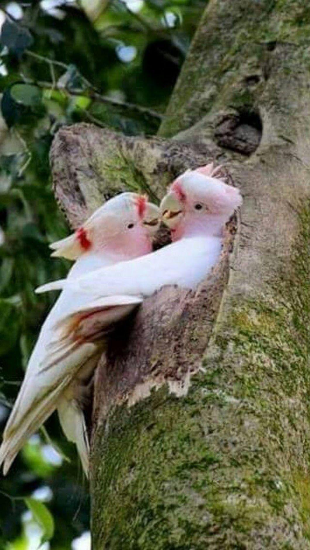 предбаннике фото поцелуя птички автоматического станка
