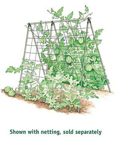 a frame melon cucumber squash support jardin pinterest jardinage tuteur tomate et. Black Bedroom Furniture Sets. Home Design Ideas