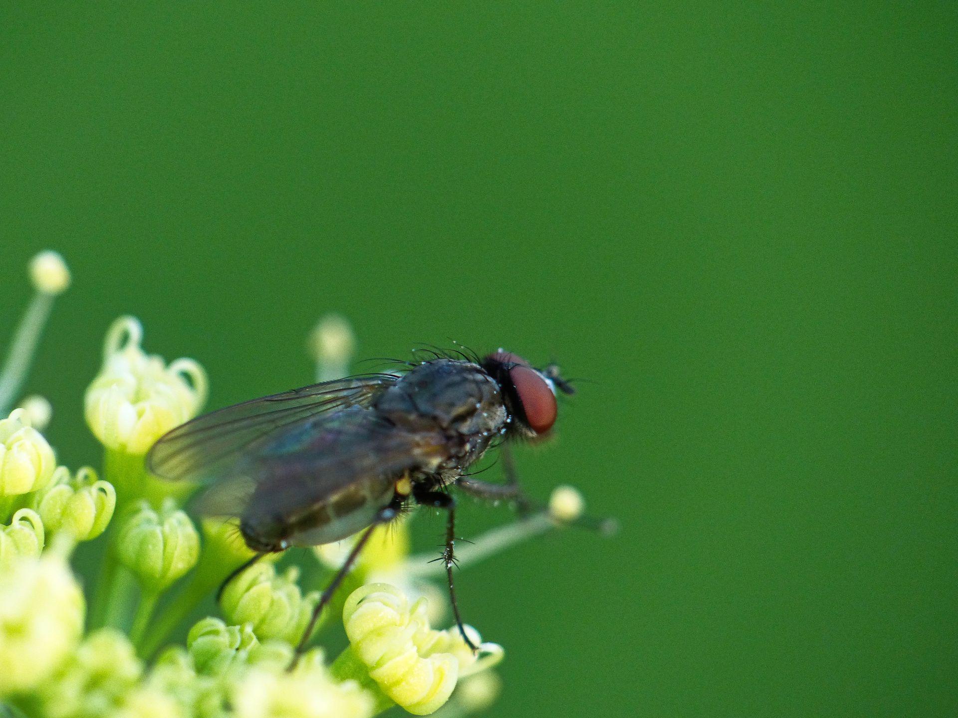 #Fliege in #Nahaufnahme