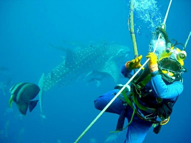 Buzo Comercial In 2020 Diving Deep Sea Diving Oil Platform