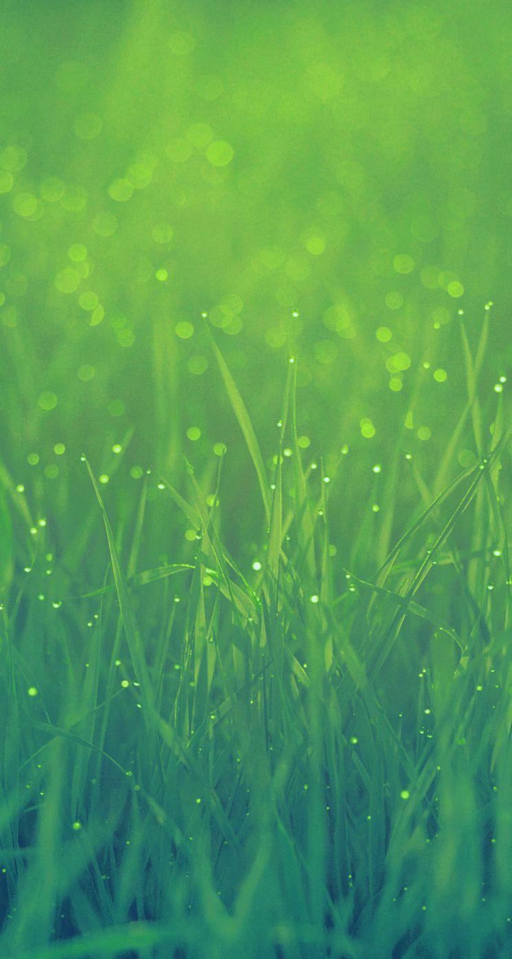 Grass Iphone Wallpaper Grass Wallpaper Iphone Wallpaper Green Iphone 5s Wallpaper