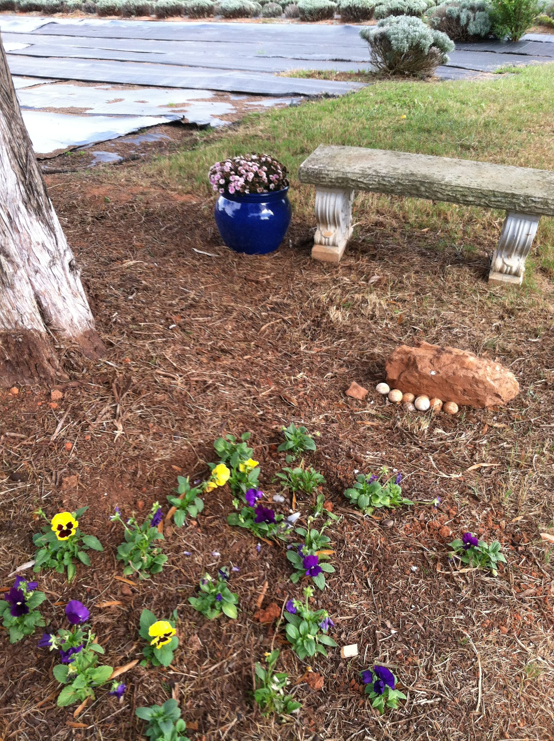 Mom\'s Pansy Bed by The Cedar Tree @The Lavender Garden | The ...
