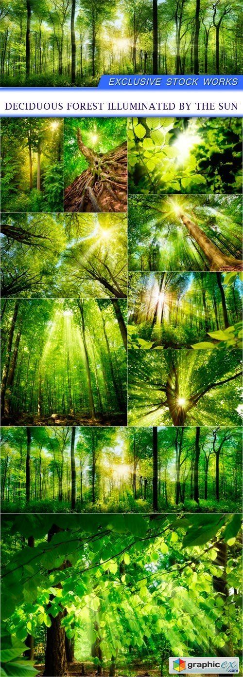 Deciduous forest illuminated by the sun 10X JPEG  stock images