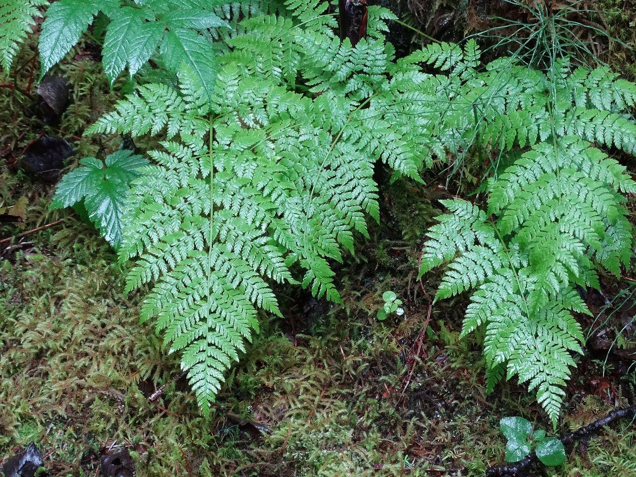 Forest ferns alaska forest nature forest ferns