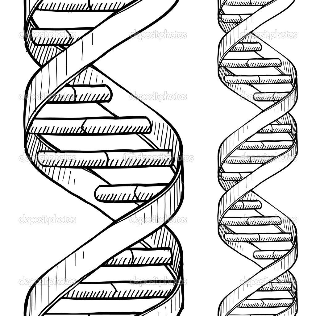 dna double helix art - Google Search | Genetics | Pinterest ...