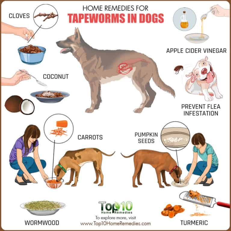 Home Remedies For Tapeworms In Dogs Top 10 Home Remedies Tapeworms In Dogs Dog Remedies Worms In Dogs