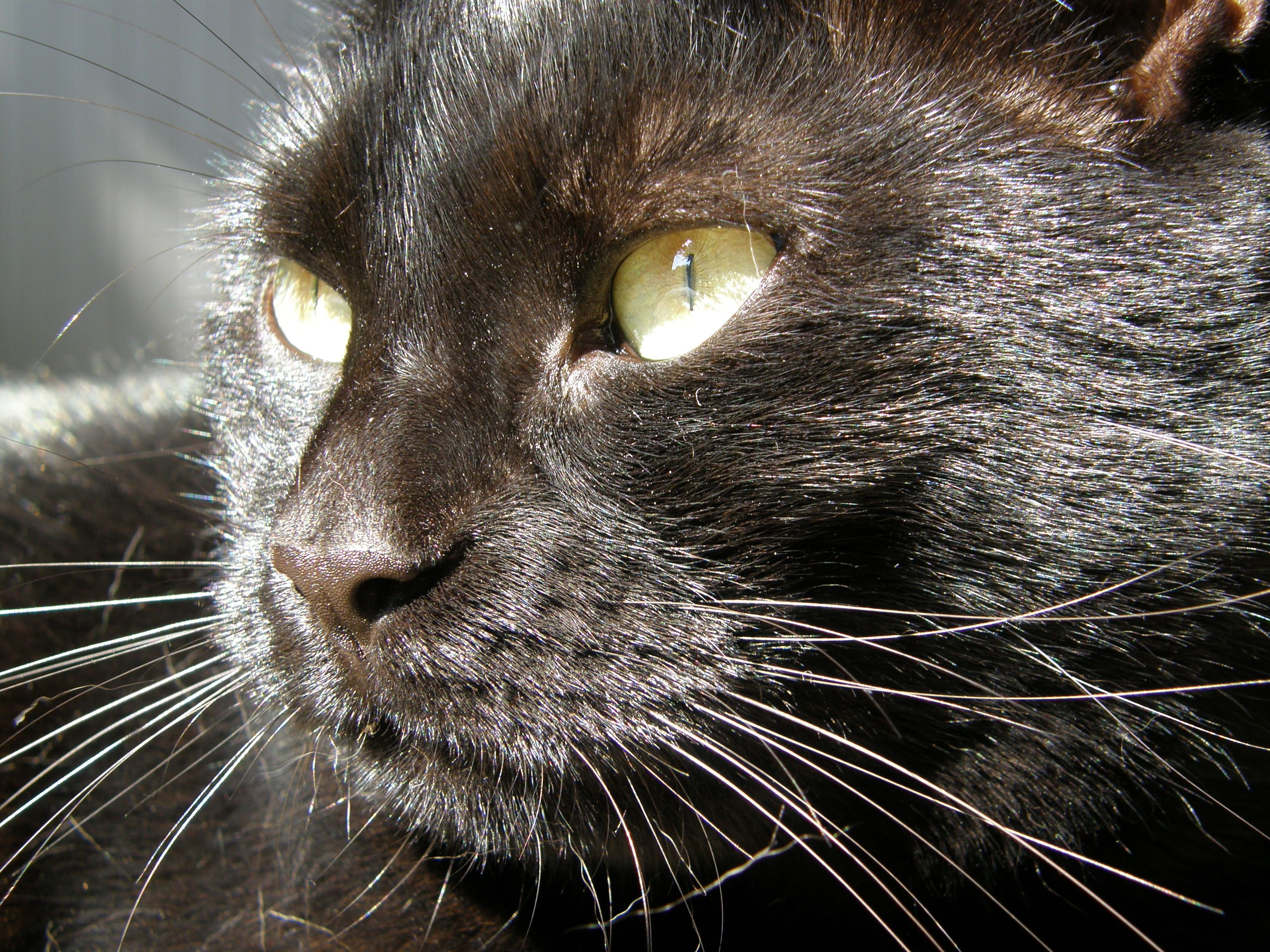 It's Black Cat Appreciation Day. Hear how to help out and remember what we love most about these solid felines.