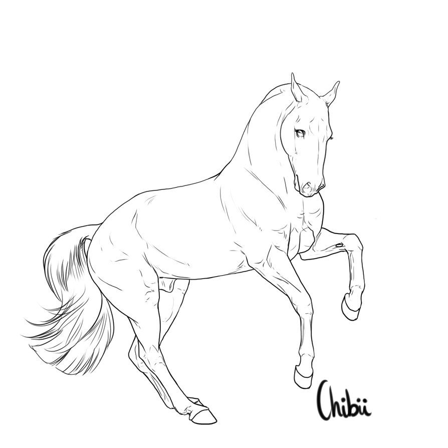 Gaited Horse Lineart Google Search Horse Drawings Horse Painting Yarn Painting