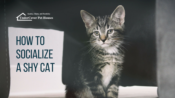 How to Socialize a Shy Cat Feral kittens, Cats, Outside