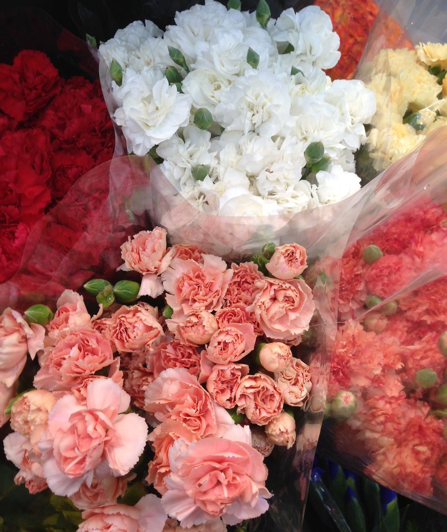 Carnations in all colors at louisville costco 899 for a packed carnations in all colors at louisville costco 899 for a packed bouquet izmirmasajfo Images