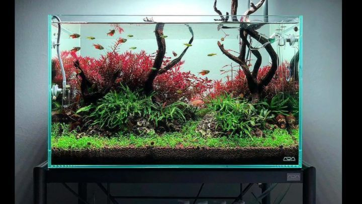 Beautiful 405 Likes, 5 Comments   Aquascapes, Fish And Shrimps. (@aquacanvas)