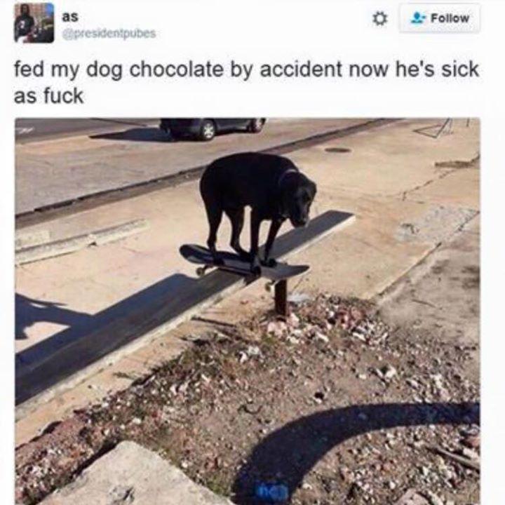 83e4add857653ce3567ab01e6c4088d3 that dog is so sick lol pinterest sick, memes and meme